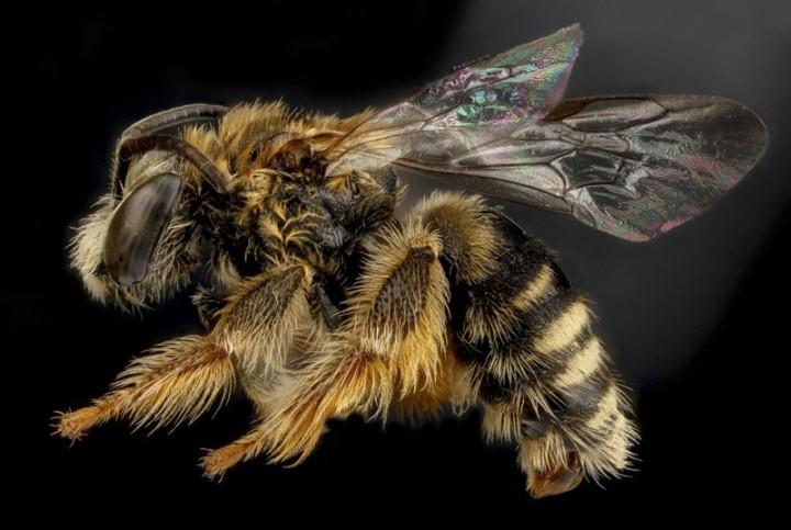Insects03 800x537 Прекрасные насекомые