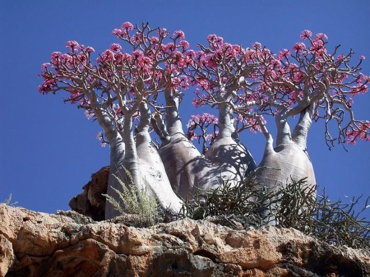 Socotra04 Удивительный остров Сокотра