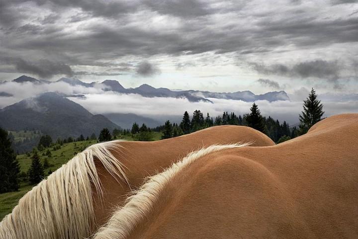 338185 Грация прекрасных лошадей в фотопроекте Equus