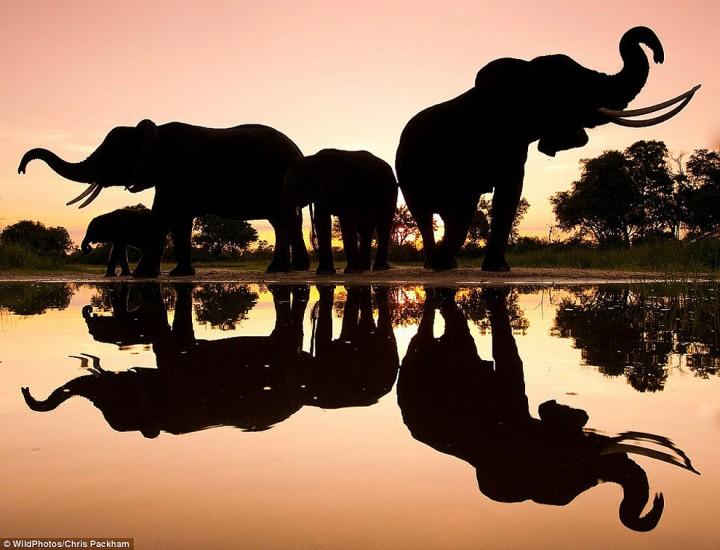 bestofwild14 Лучшие фотографии диких животных за 2013 год