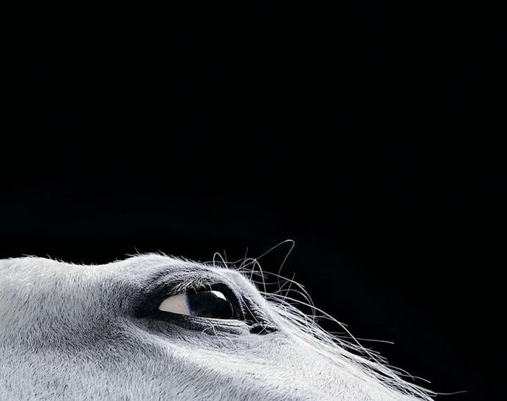 Horsei 13 Грация прекрасных лошадей в фотопроекте Equus