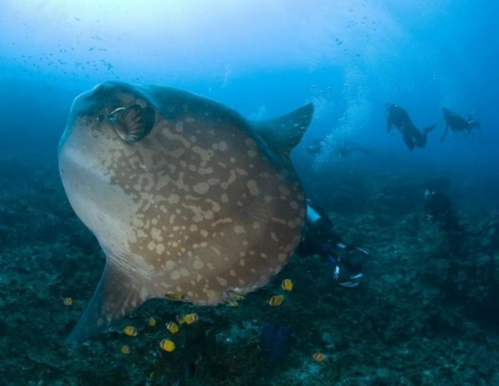 prichudlivieribi 4 Топ 10 самых причудливых рыб мирового океана