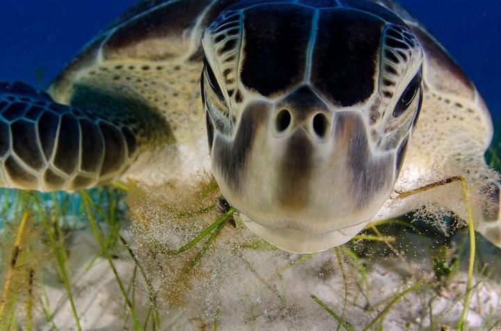 bestofwild07 Лучшие фотографии диких животных за 2013 год