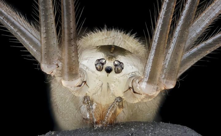 Insects19 Прекрасные насекомые