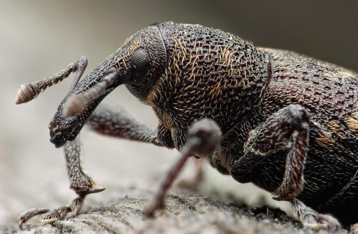 insects09 Портреты насекомых
