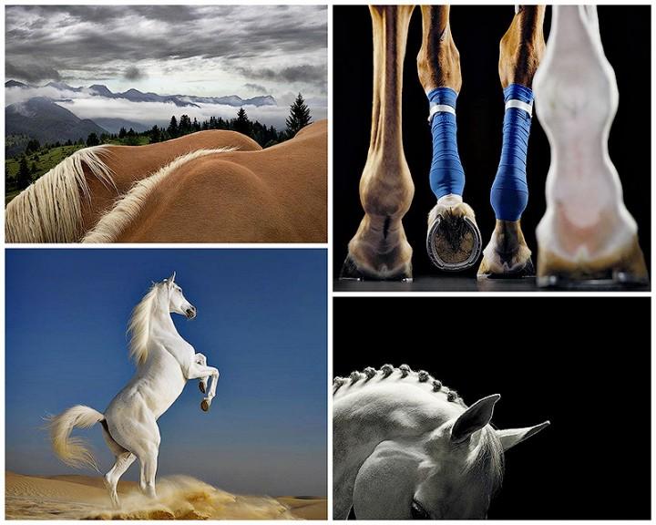 BIGPIC6 Грация прекрасных лошадей в фотопроекте Equus