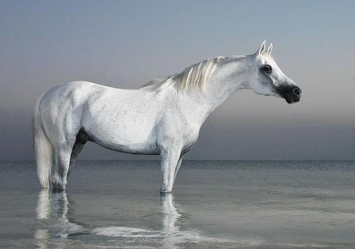 Horsei 12 Грация прекрасных лошадей в фотопроекте Equus