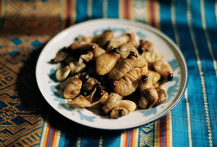 edible11 Фотогид по съедобным насекомым