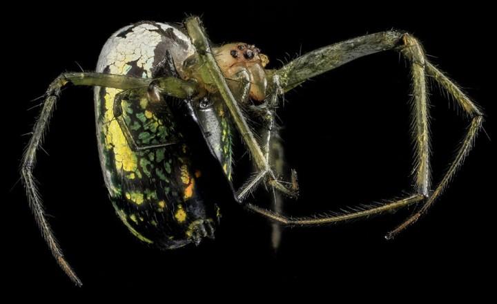Insects14 Прекрасные насекомые