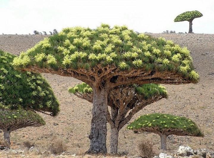 Socotra07 Удивительный остров Сокотра