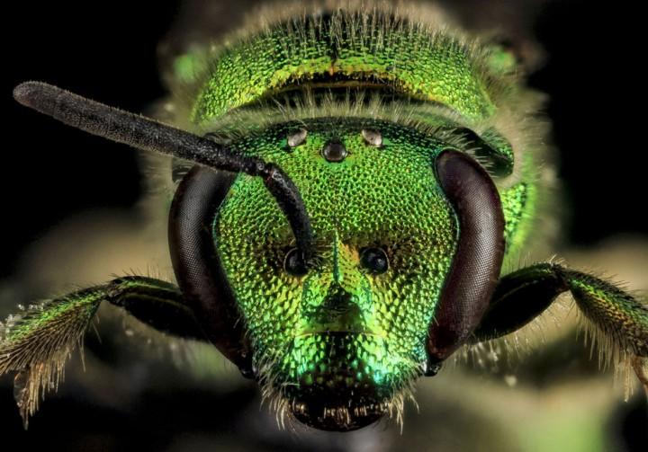 Insects09 Прекрасные насекомые