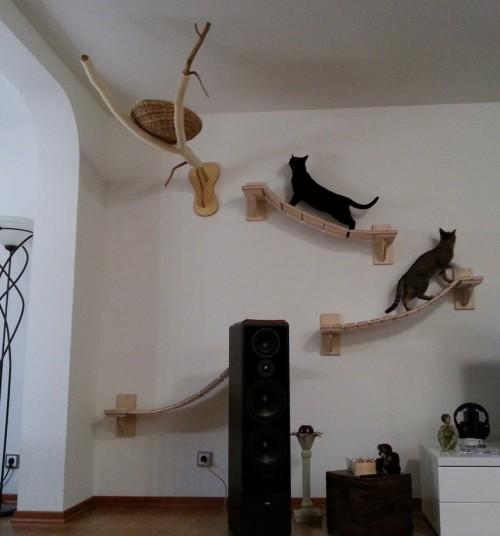 Как создать игровую площадку для кота в квартире