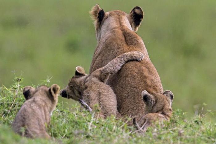 Отцы и дети.