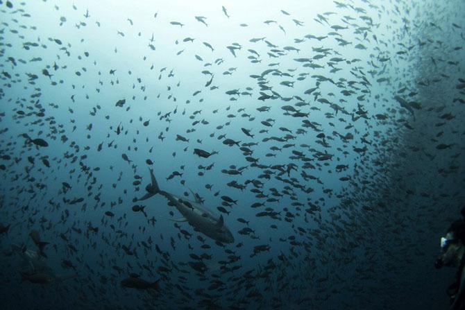 Удивительные создания на Галапагосских островах