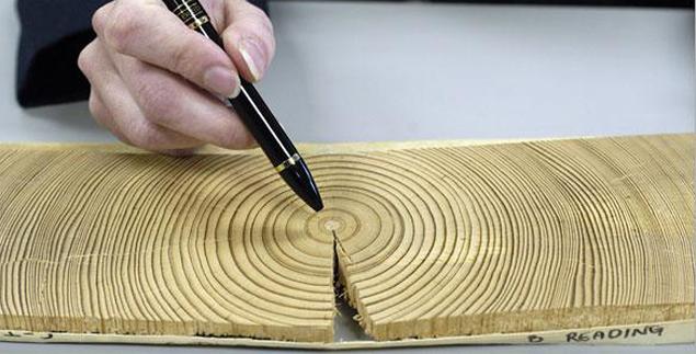 В древесине древних кедров обнаружено повышенное содержание углерода 14.