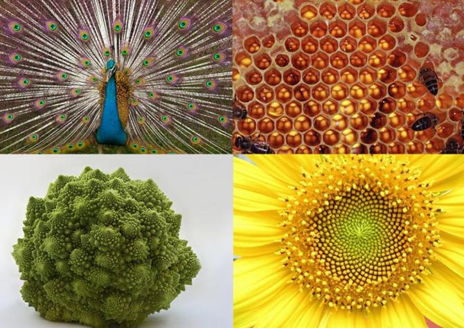 Превосходные примеры симметрии в природе