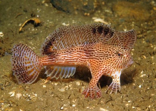 10 самых странных морских существ