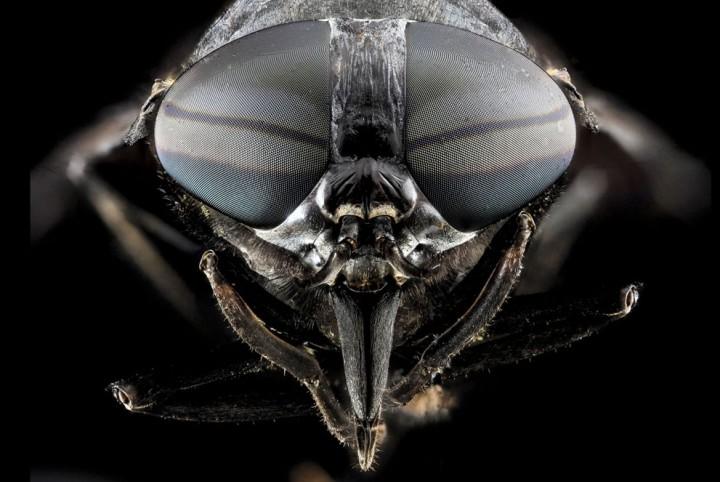Insects20 Прекрасные насекомые