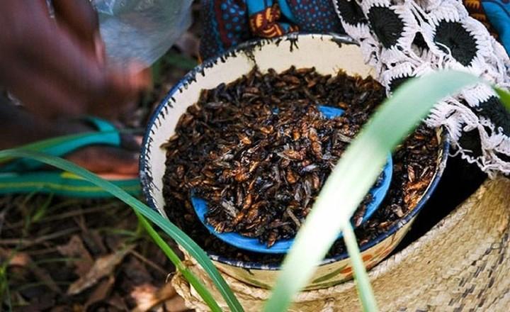 edible12 Фотогид по съедобным насекомым