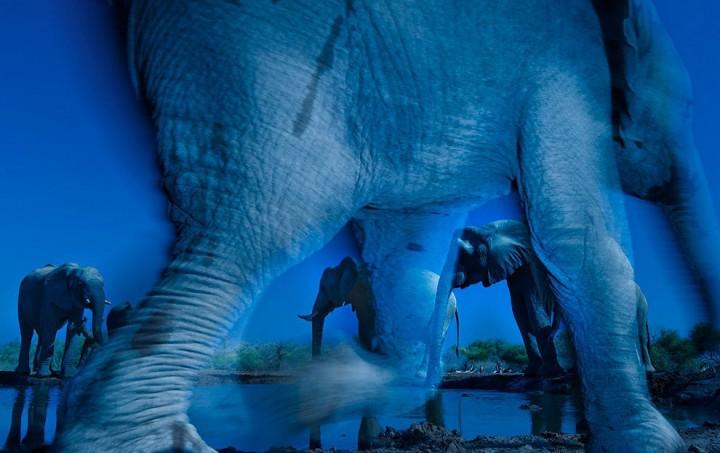 bestofwild09 Лучшие фотографии диких животных за 2013 год