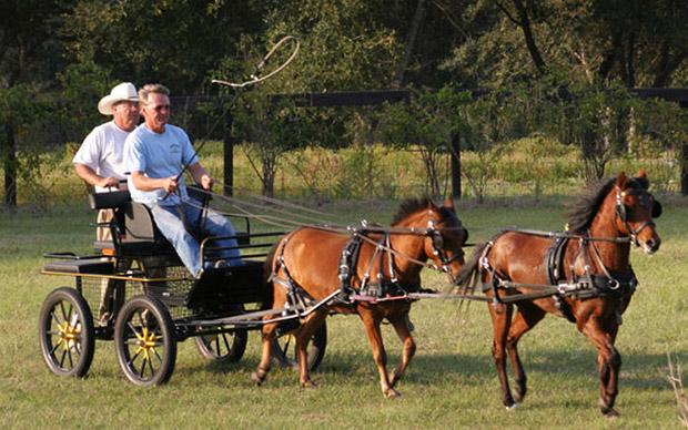 Каспийские лошади
