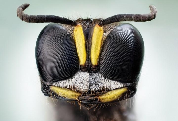 insects02 Портреты насекомых