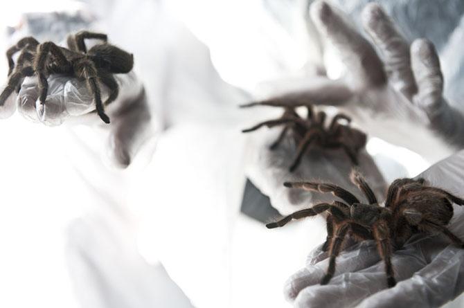 Чилийская паучья ферма