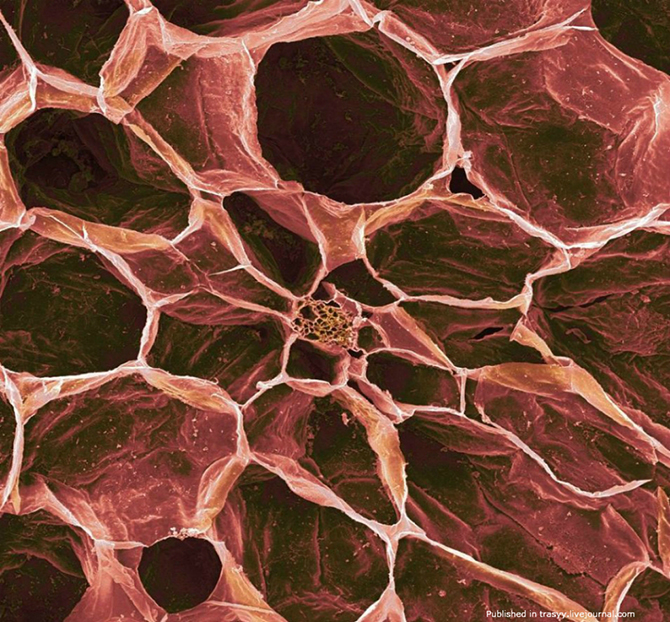 Ваш завтрак под микроскопом