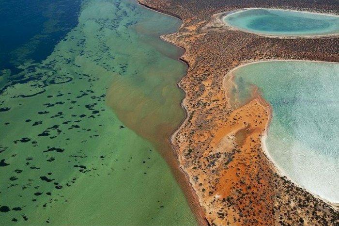 Гипсовые озера birridas в заливе Шарк