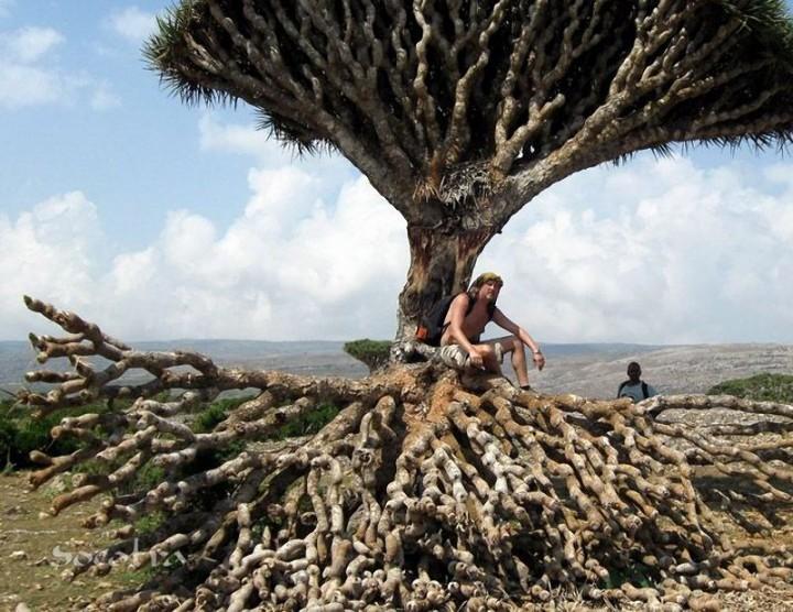 Socotra05 Удивительный остров Сокотра