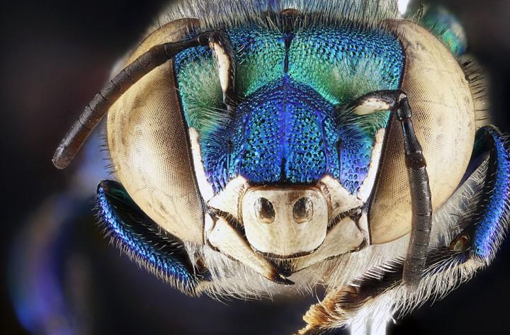 Insects01 Прекрасные насекомые