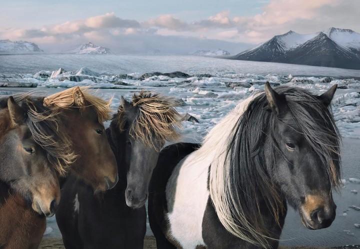 Tim Flaq Грация прекрасных лошадей в фотопроекте Equus