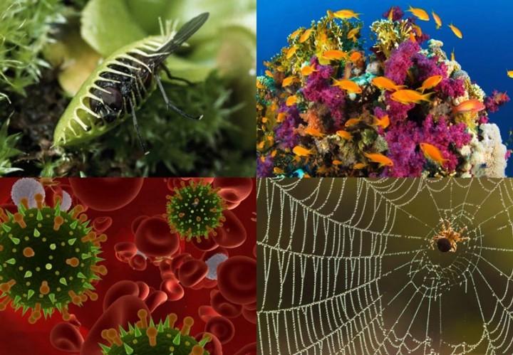 BIGPIC77 Новые изобретения, подсказанные природой